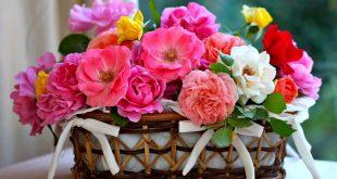 صوره صور ورد جميلة , عبر عن حبك بتقديم وردة لحبيبك