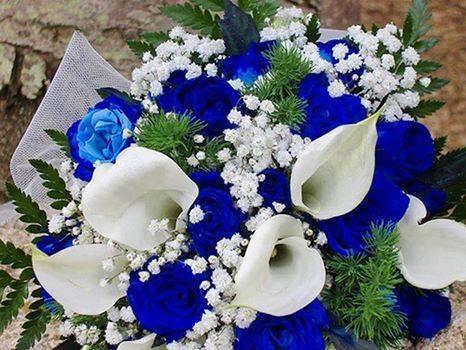 بالصور اجمل صور للورد , اعمل خلفية مميزة لموبيلك من اروع الازهار 82 7