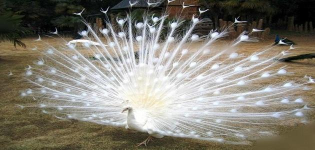 صورة من اجمل مخلوقات الله , اروع صور الابداع في كل ما خلقه الله