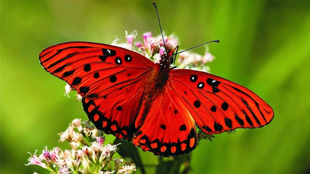بالصور من اجمل مخلوقات الله , اروع صور الابداع في كل ما خلقه الله 205 5