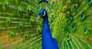 صوره من اجمل مخلوقات الله , اروع صور الابداع في كل ما خلقه الله
