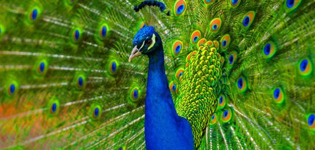 بالصور من اجمل مخلوقات الله , اروع صور الابداع في كل ما خلقه الله 205