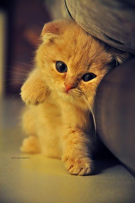 صورة اجمل القطط في العالم , خلفيات للقطط جميلة جدا