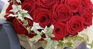 بالصور صور ورود جميلة جدا , اروع خلفية زهور بجميع الالوان 1366 10 310x165