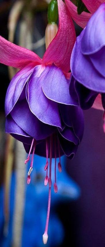 صوره اجمل ورد في العالم , احلى خلفية طبيعية للزهور