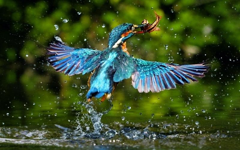 صورة اجمل صور في العالم , خلفيات طبيعة رائعة