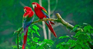 صوره اجمل صور في العالم , خلفيات طبيعة رائعة
