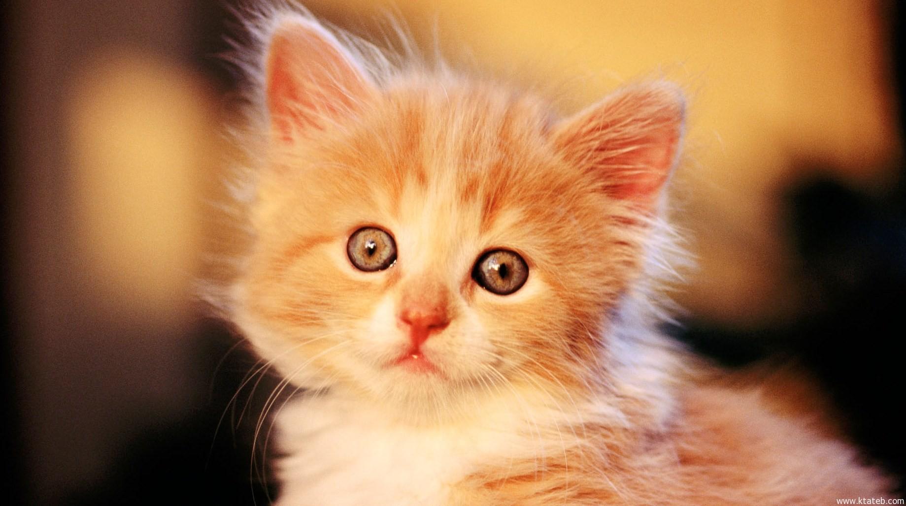 صورة القطه في الحلم , رؤية القطة في المنام