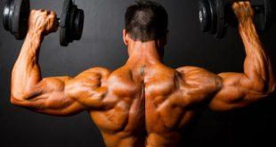 صور لماذا تحتاج المراة الى البروتين اقل من الرجل , اهم الاسباب لزيادة كميه اليروتينات للرجال