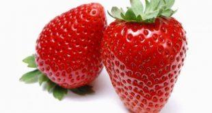 بالصور فوائد الفراولة , اهمية الفراولة للصحة 6100 2 310x165