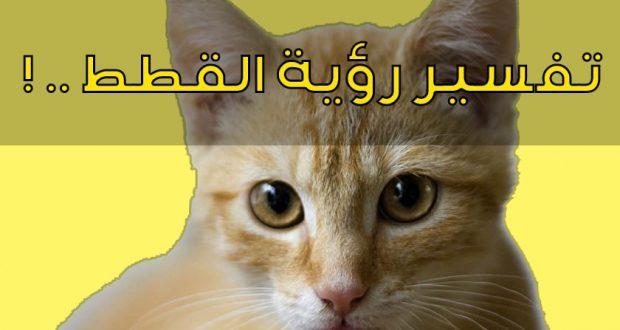 صوره رؤية القط في المنام , تفسير من راى قطة خلال النوم