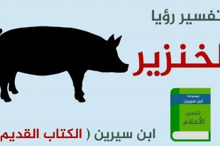 صوره رؤية الخنزير في المنام , تفسير حلم من راى خنازير