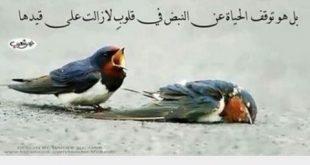 صوره كلمات عن الموت حزينه , احلى صور تعبر عن حزن القلب