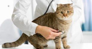 صوره اضرار القطط على الرجال , هل يوجد خطر على الاسرة من تربية القطة