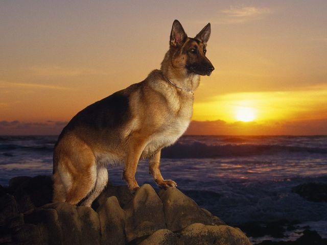 صور نباح الكلاب في الليل , لماذا ينبح الكلاب وقت الفجر