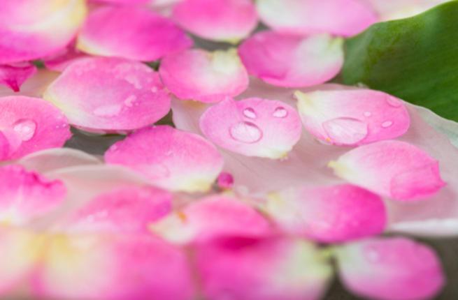 صوره فوائد زيت الورد للمنطقة الحساسة , استخدامات زيت الورد