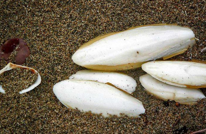 صورة فوائد زبد البحر , تنحيف البطن