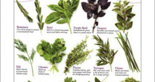 صوره اعشاب طبية , علاج بالاعشاب الطبية حصرى