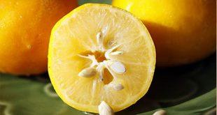 صوره فوائد بذور الليمون , تعرف علي اهمية بذور الليمون
