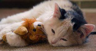 صورة امراض القطط , تعرف علي الامراض التي تصيب القطط