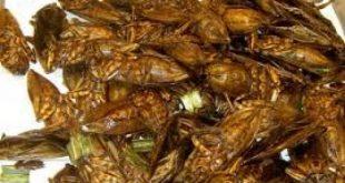 صوره اكل الصراصير في الصين , شاب ياكل الصرصار