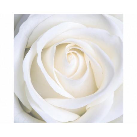 بالصور صورة بيضاء , اروع واجمل الخلفيات البيضاء 3460 5