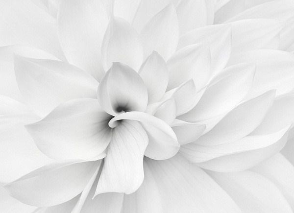 بالصور صورة بيضاء , اروع واجمل الخلفيات البيضاء 3460 8