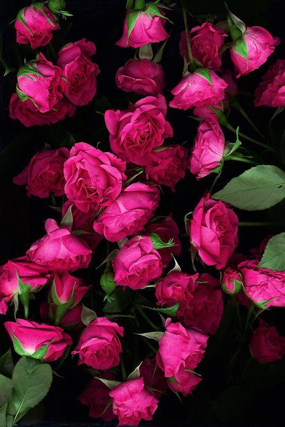 بالصور ورود الصباح , احلى باقات زهور للصباح على الفيسبوك 4358 2