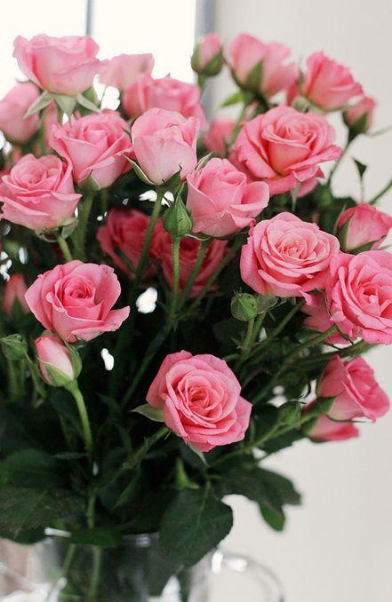 بالصور ورود الصباح , احلى باقات زهور للصباح على الفيسبوك 4358 3