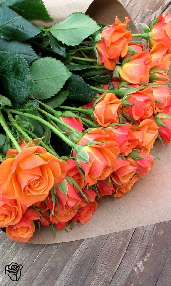 بالصور ورود الصباح , احلى باقات زهور للصباح على الفيسبوك 4358 5