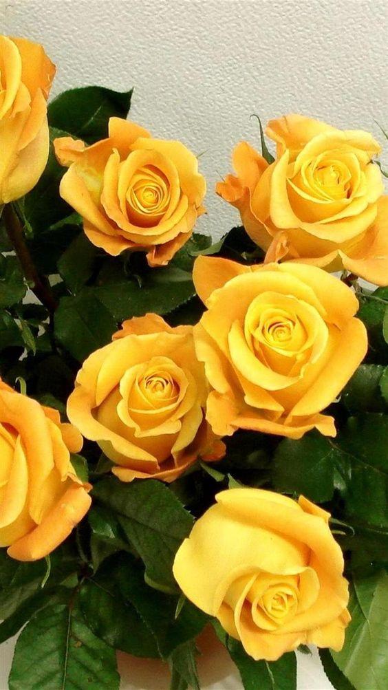 بالصور ورود الصباح , احلى باقات زهور للصباح على الفيسبوك 4358 7