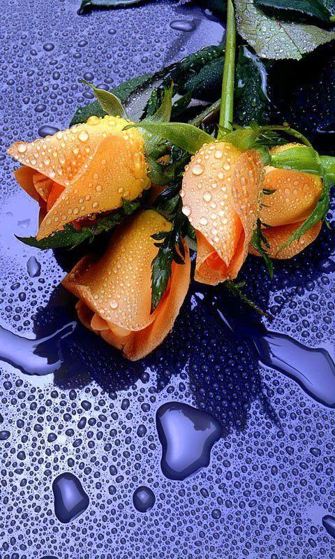 بالصور ورود الصباح , احلى باقات زهور للصباح على الفيسبوك 4358 8