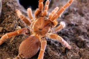 صوره اسم ذكر العنكبوت , تعريف ومعني عنكبوت بالعربي