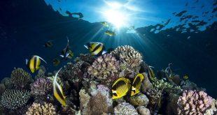 صوره صور تحت الماء , اروع الصور لما تحت الماء