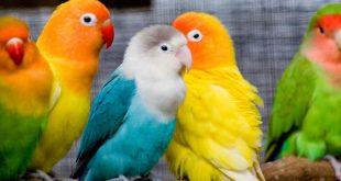 صوره تفسير الطيور في الحلم , الطيور في المنام