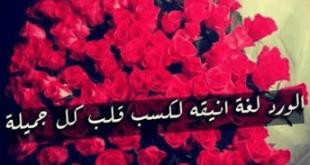 صوره كلمات عن الورد , خواطر عن الورود