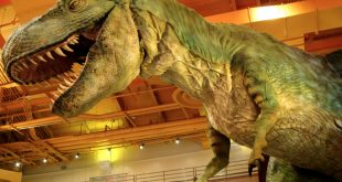 صورة الديناصورات الحقيقية , معلومات عن الديناصورات