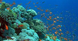 صورة صور قاع البحر , جمال عالم البحار