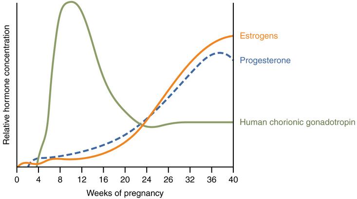 صور نسبة هرمون الحمل في الدم , كم تكون نسبة هرمون الحمل في الاسابيع الاولي