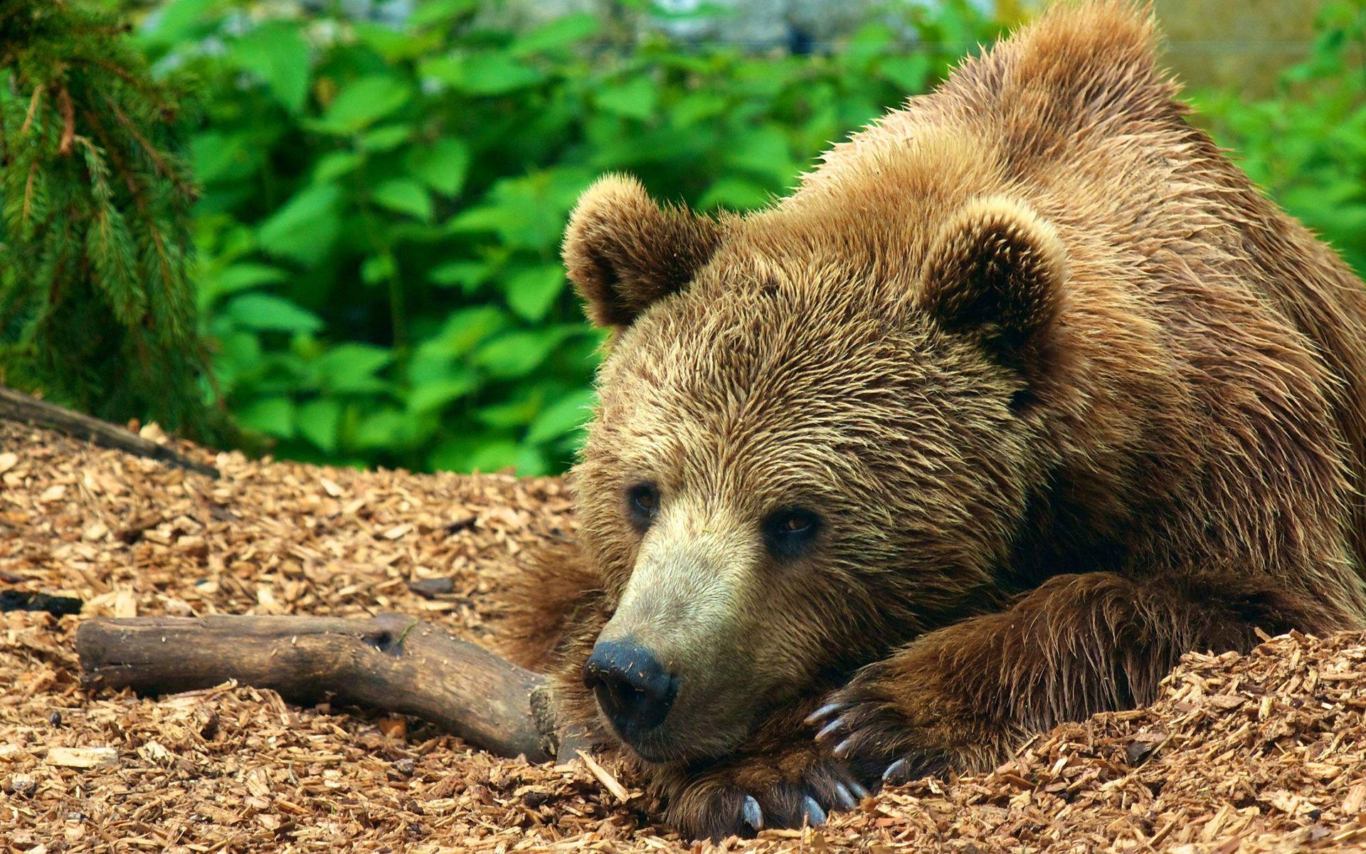 صور صور حيوانات , صور للحيوانات بجودة عالية