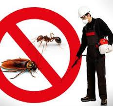صوره شركة مكافحة حشرات بالاحساء , الطريقه الامانه من للتخلص من الحشرات