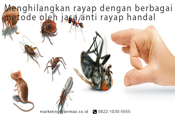صوره مكافحة حشرات بمصر , افضل شركات لمكافحه الحشرات فى مصر