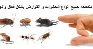 صور مكافحة حشرات بمصر , افضل شركات لمكافحه الحشرات فى مصر