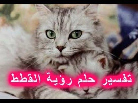 صوره تفسير الحلم بالقطط , رؤية القطط فى المنام