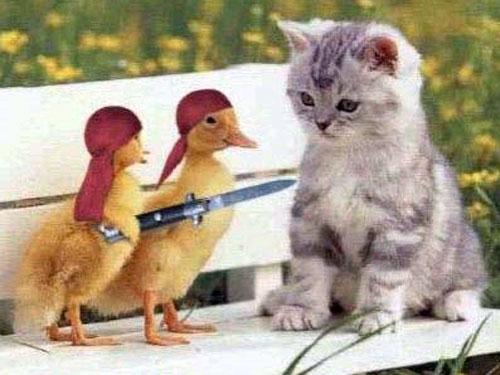 بالصور اضحك مع القطط , احلى مقاطع مضحكة عن القطط 2901 1