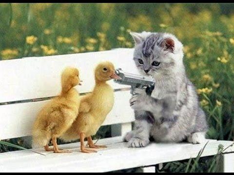 بالصور اضحك مع القطط , احلى مقاطع مضحكة عن القطط 2901