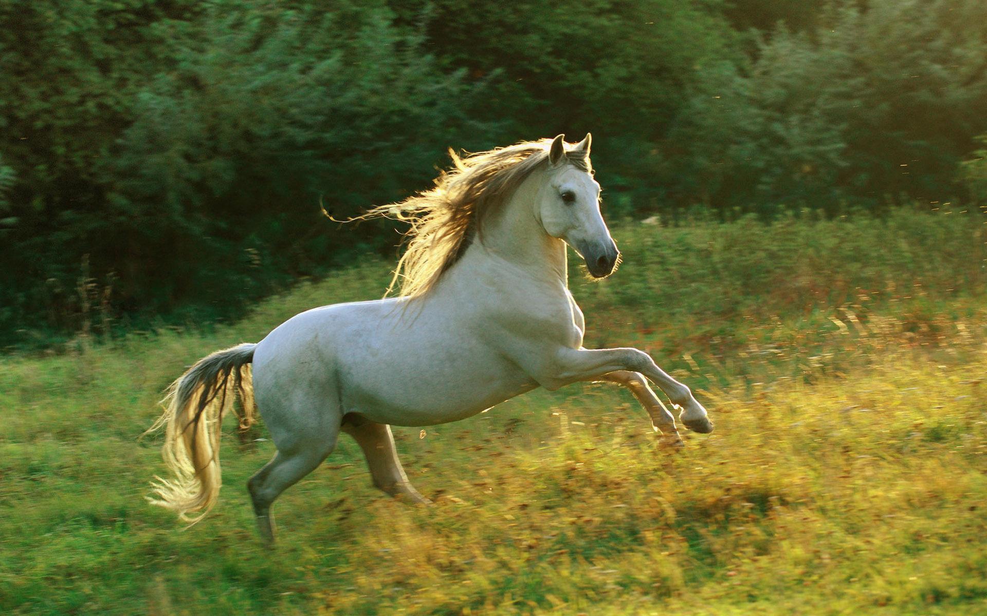بالصور صور خيول جميله , اجمل صوره لاقوى خيل 3182 1