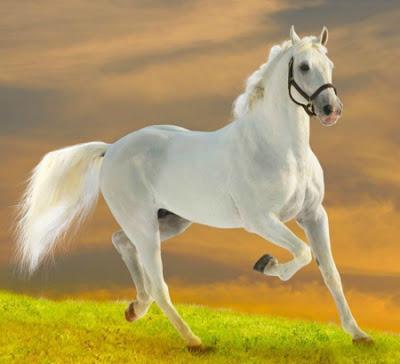 بالصور صور خيول جميله , اجمل صوره لاقوى خيل 3182 10