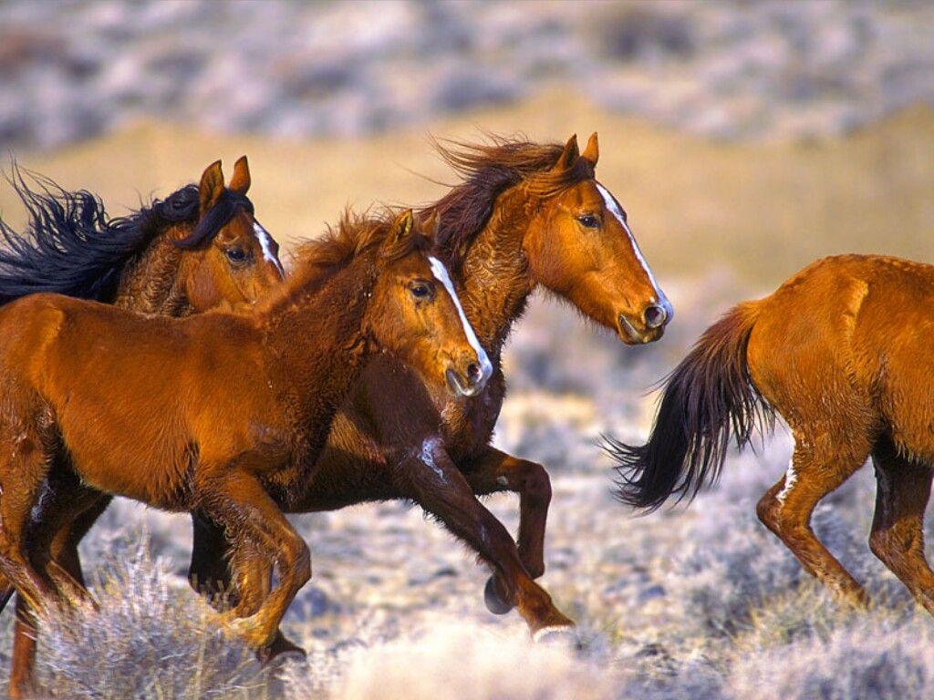 بالصور صور خيول جميله , اجمل صوره لاقوى خيل 3182 2