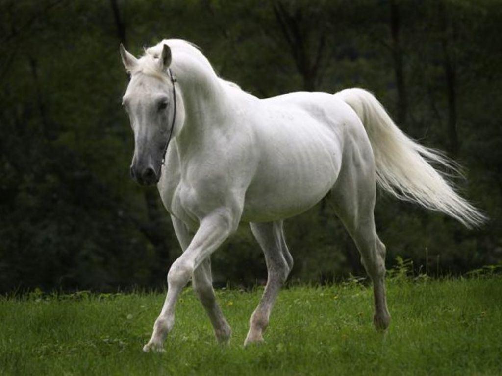 بالصور صور خيول جميله , اجمل صوره لاقوى خيل 3182 9